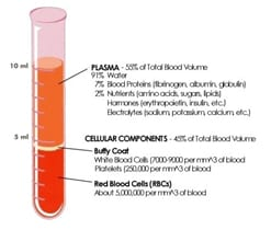 composition of blood Blood: Structure, Function, Components