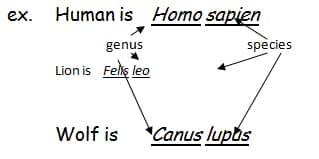 naming The Names of Living Things: Binomial nomenclature