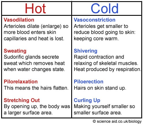 Methods of Thermoregulation (SP)