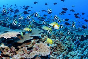 Marine Ecosystem Biome Biotic and Abiotic Factors Influence on Ecosystems