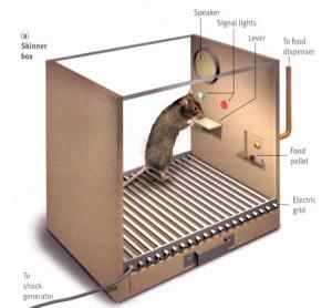 skinner box 300x278 B.F. Skinner: Operant Conditioning, Skinner Box, Baby Tender