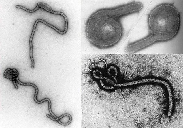 Ebola cure discovered in nigeria zip
