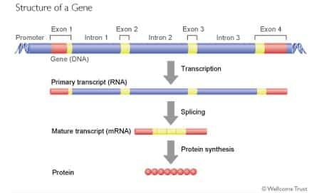 Nature Genetics Review Transcription
