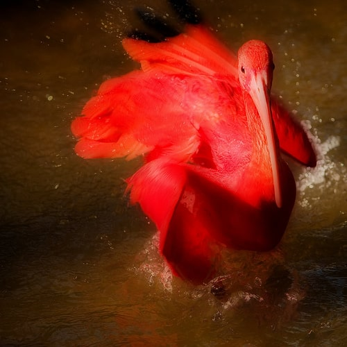 the scarlet ibis overall story
