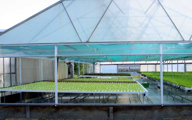 the usage of hydroponics in producing crops Featuring consumer information and labeling ers examines the effects of nutrition information provision and education programs on.
