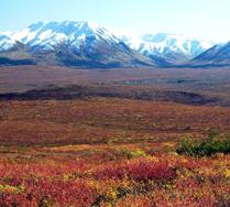 Arctic Tundra 1 Arctic Tundra: Location, Climate, Species