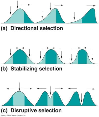 Different Types Of Natural Selection Graphs