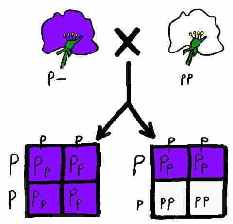 What is a Test Cross: Why is it used (Biology ...