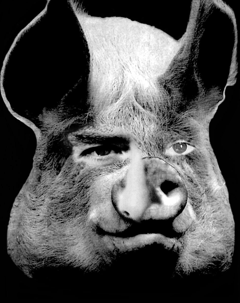 Animal Farm Allegory Of Stalinism Schoolworkhelper