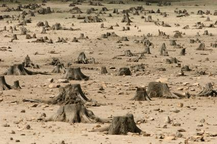 Effects of Deforestation - SchoolWorkHelper