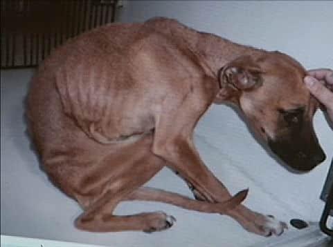 dog-abuse