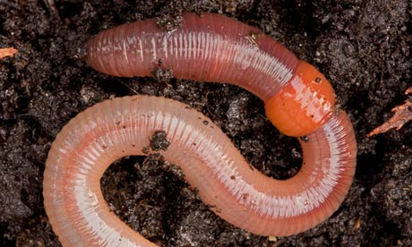 earthworms - photo #34