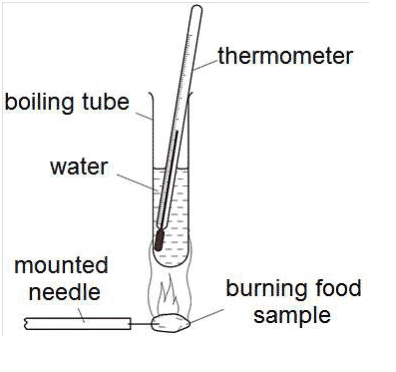 food tube diagram energy content of food lab report answers schoolworkhelper  energy content of food lab report