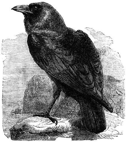 The Raven By Edgar Allan Poe Theme And Analysis